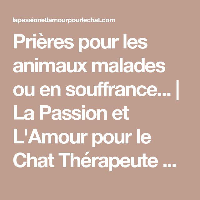 Prières pour les animaux malades ou en souffrance... | La Passion et L'Amour pour le Chat Thérapeute énergéticienne Certifiée