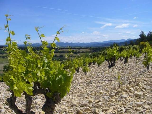 Le terroir du vignoble de Rasteau...
