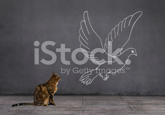Tabby Cat with Pigeon Sketched on the Wall (royalty-free stock photo) © mgkaya