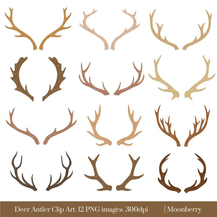 deer antlers drawing easy - photo #14