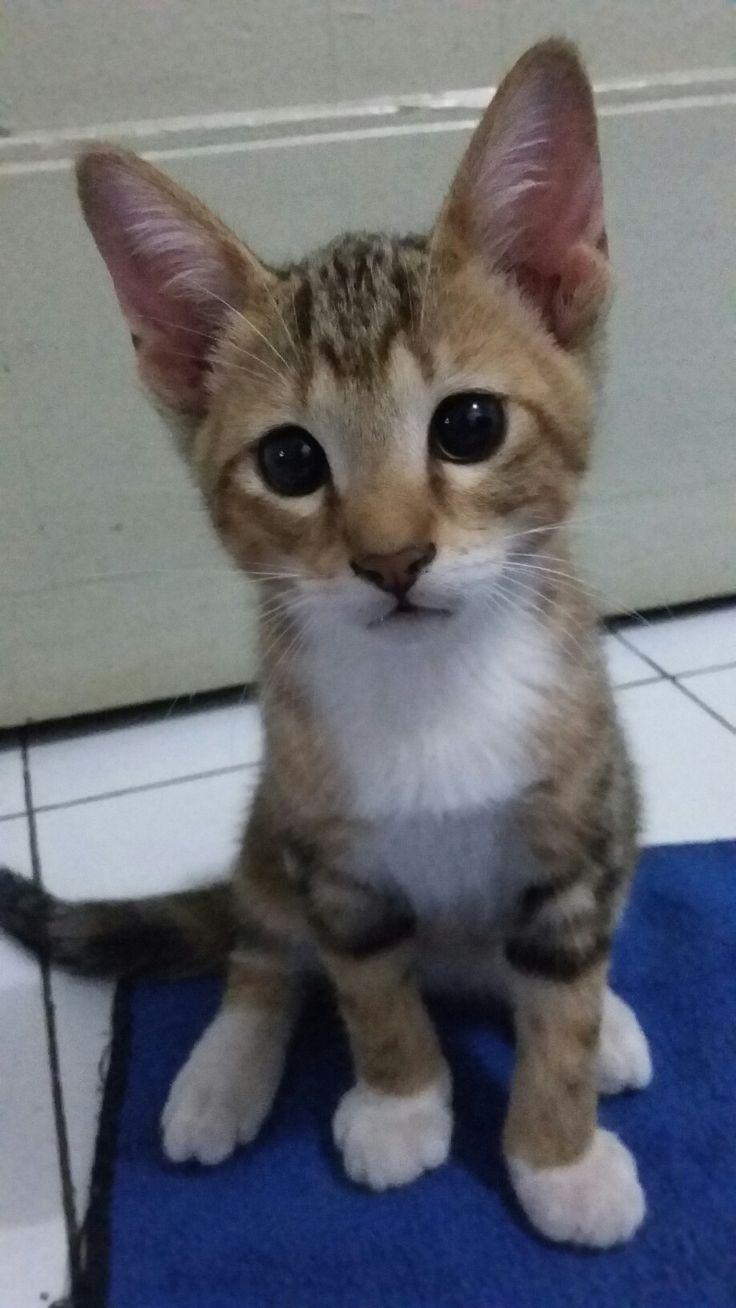 Choco (Boy) 2 month 2 week