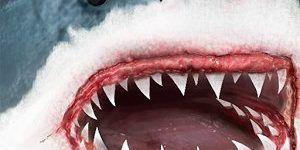 Ultimate Shark Simulator APK Free - http://apkgamescrack.com/ultimate-shark-simulator/