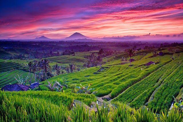 Jatiluwih-rice-terraces-scenery