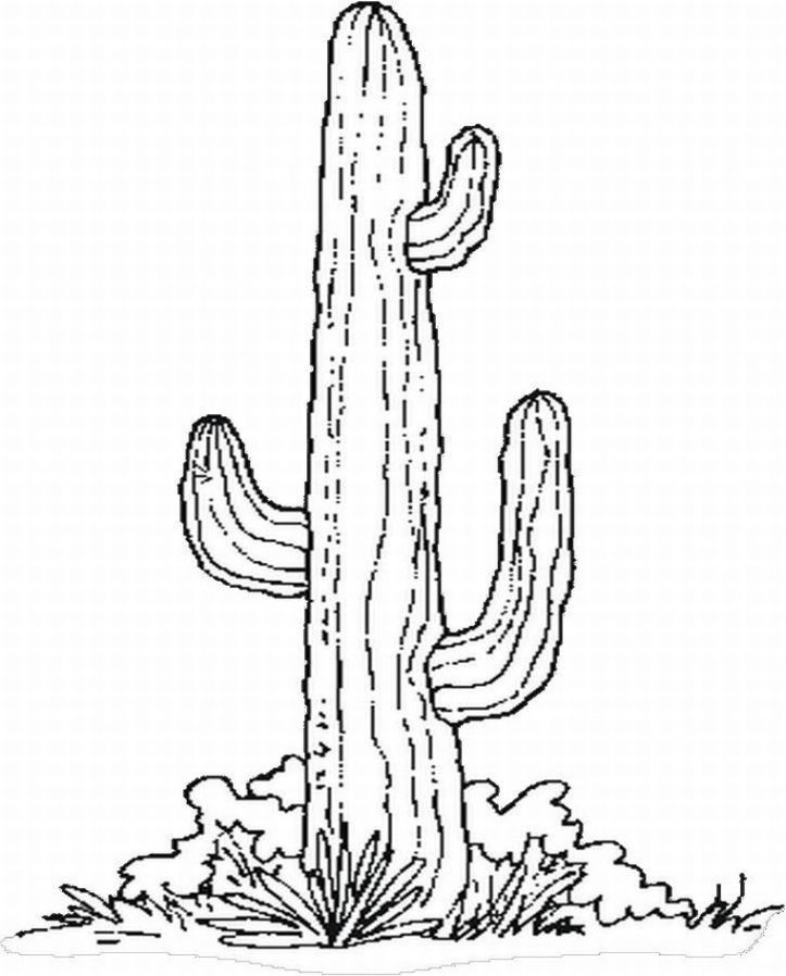 12 Pics Of Cactus Coloring Page Template Cactus Drawing