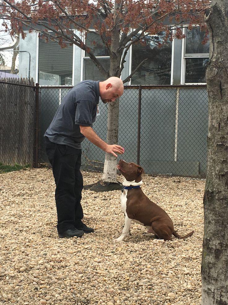 Best 25 Terrier Pitbull Mix Ideas On Pinterest  American -7597