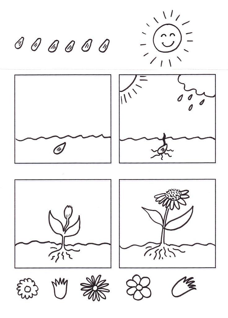 Väritys kasvin kasvu kasvaminen istutus hoito