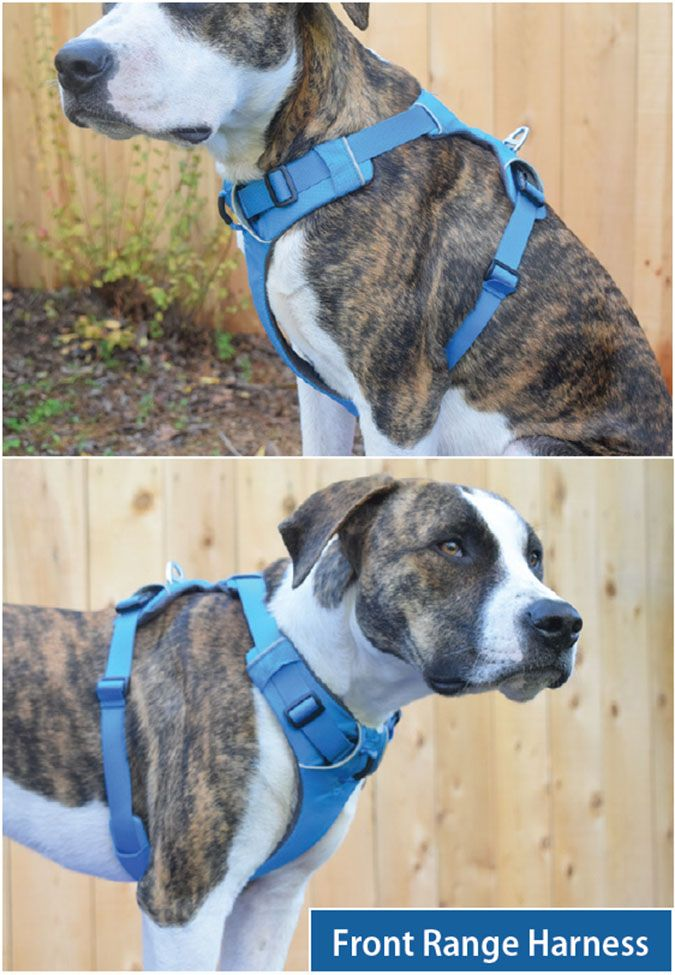 The Best Front Clip Dog Harnesses Dog Harness Dogs Martingale