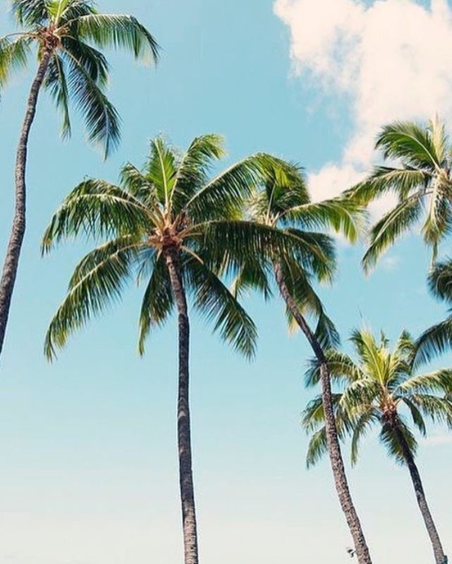 Palm Tree Beach: 17 Best Images About Palm Trees On Pinterest