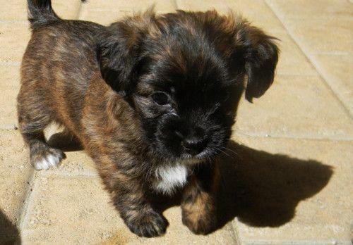 : Dog Person, Cutest Puppy, Cuteness, Baby Animalz, Puppy I Ve, Pet, Dogs Aka, Dream Dogs