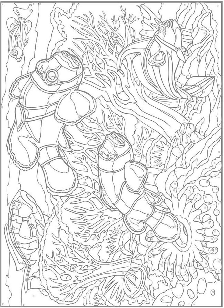 Creative Haven Sea Life Color By Number Coloring Book Coloring Pages