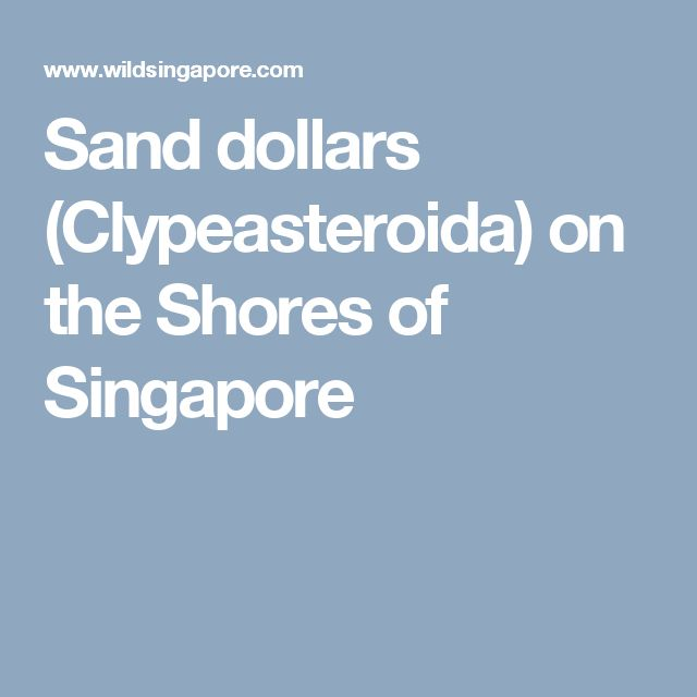 Sand dollars (Clypeasteroida) on the Shores of Singapore