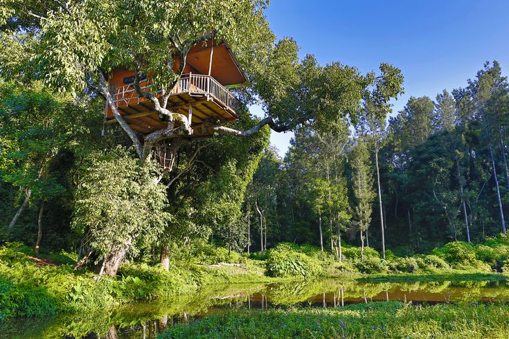 a dream home on the top of a tree