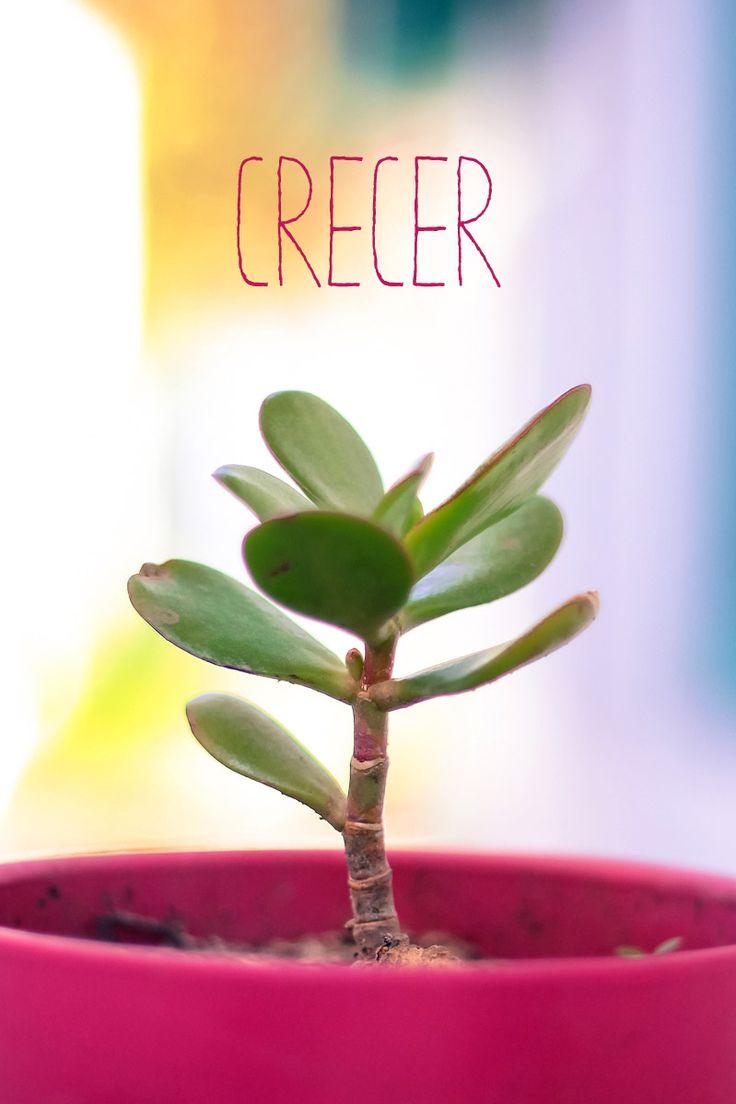 Cecer
