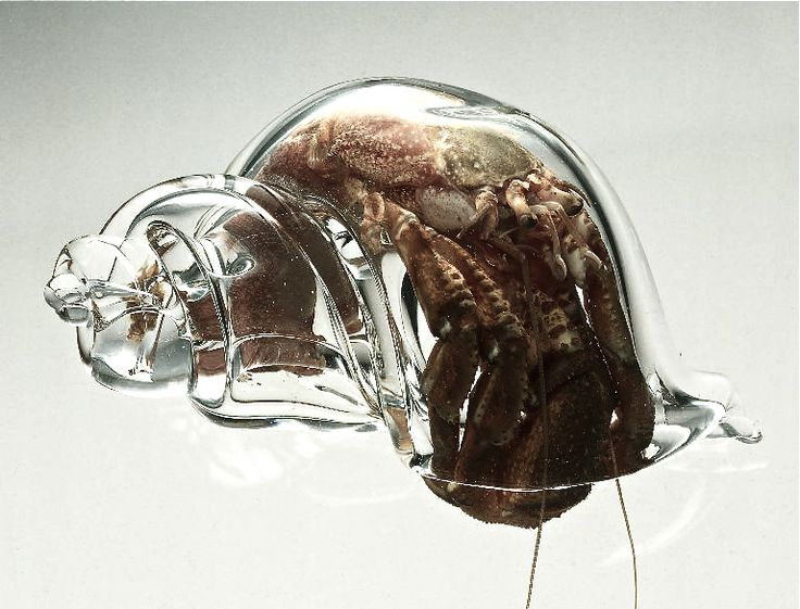 Those Who Live In Glass Houses . . .  Custom-crafted glass shells give biologists an unprecedented view of hermit crab housing behaviors. The sharing and swapping of shells between hermit crabs creates elaborate social networks, a blend of cooperation and competition that you've got to read to believe.  (ᔥ Carin Bondar)