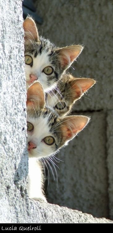 Curious Cuties - peek a boo!