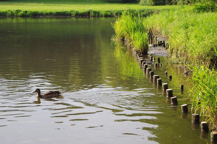 Pictografio: Duck