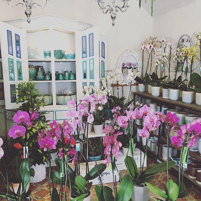 Rincón de orquídeas 🌸 #Orchids #flowershop #floristeriasitges #flowershopsitges