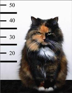 Wanted: extremely moody cat with unsolved issues