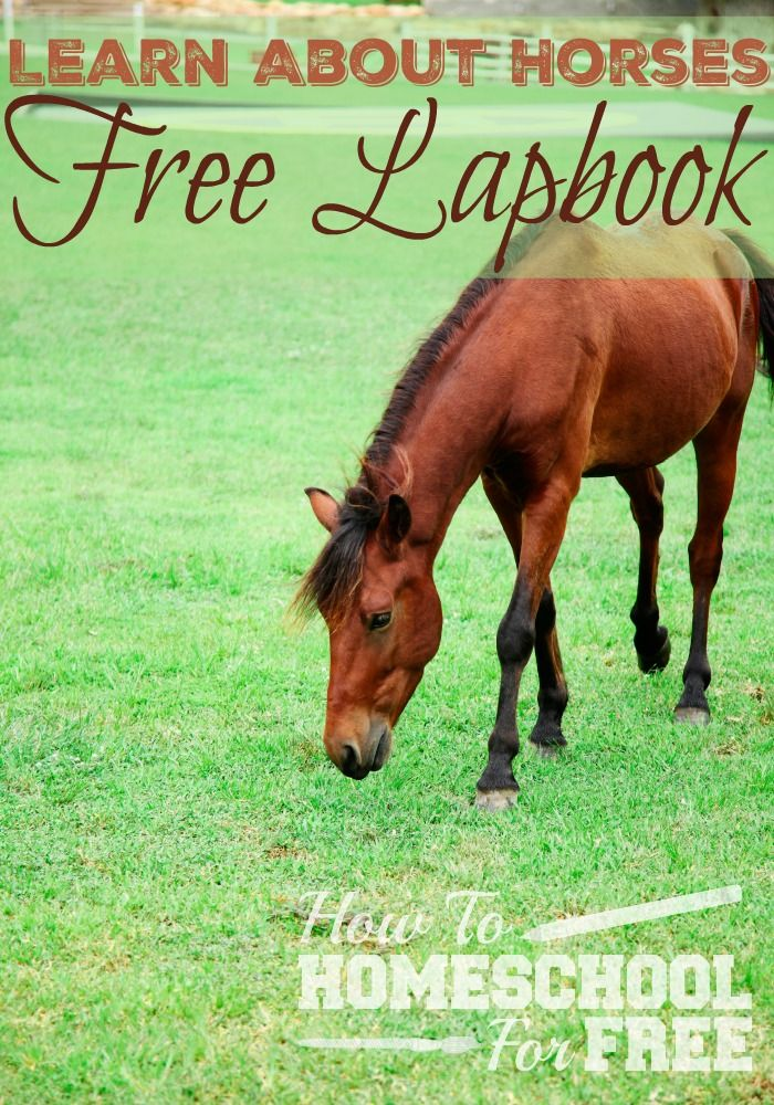 Learn all about horses with this FREE Lapbook! Includes word searches, notebooking pages, book studies, and more!