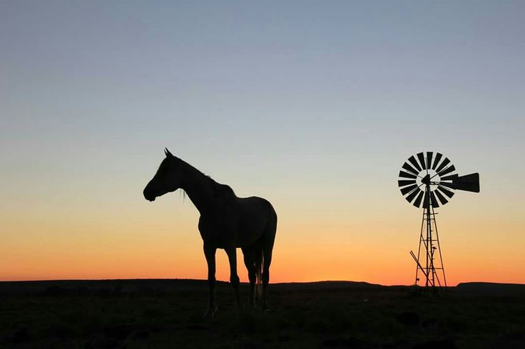 1000+ Images About Horse Pictures On Pinterest