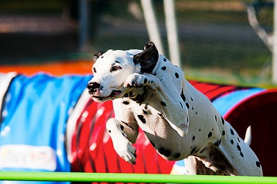 Pets to Make You Proud – Churchill's Dog Boot Camp Competition