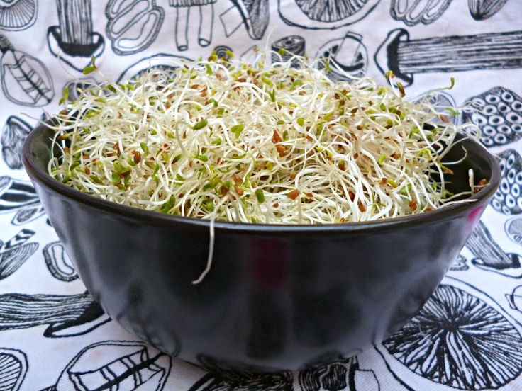 how to grow sprouts inside