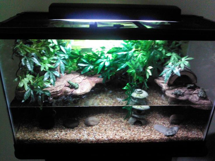 Fire belly toad tank setup bellied toads pinterest class for Fish tank frogs