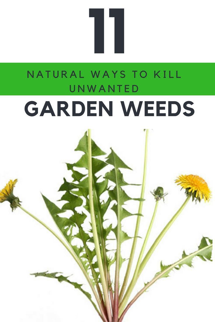 11 Natural Ways to Kill Your Unwanted Garden Weeds Immediately. | http://Ideahacks.com