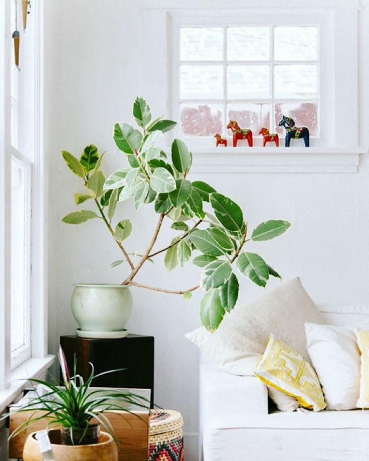 262 mejores im genes sobre kasvikuvia houseplants en - Luces para plantas de interior ...