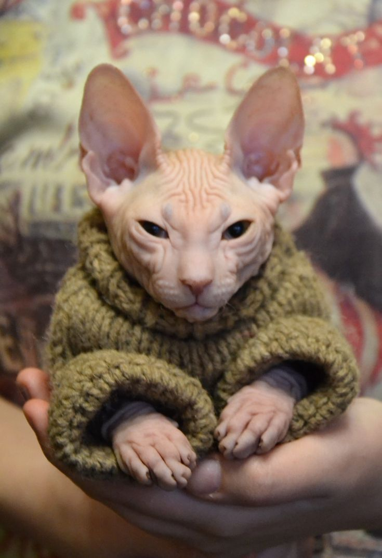「動物」のおすすめ画像 3370 件   Pinterest   かわいい動物、ふわふわなペット、動物の写真