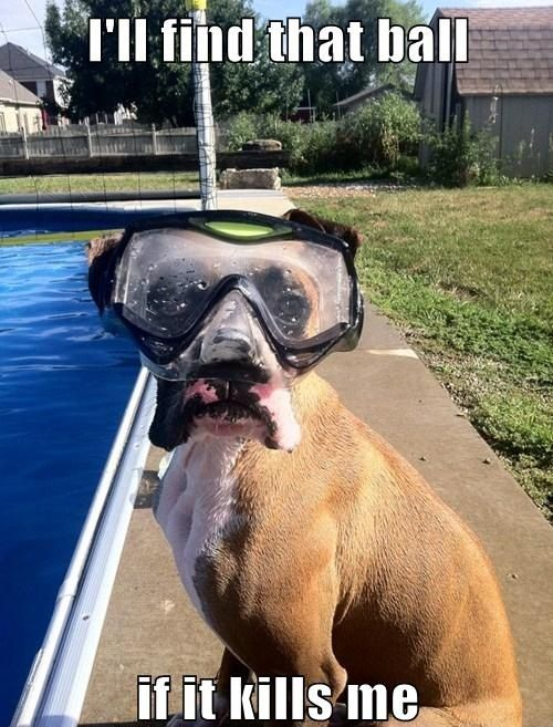 @Danielle Crossley step 1, get a pool, step 2, put goggles on percy, step 3, send me funny picture of percy with goggles.
