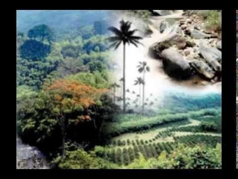 Reflexión sobre la perdida de la Biodiversidad