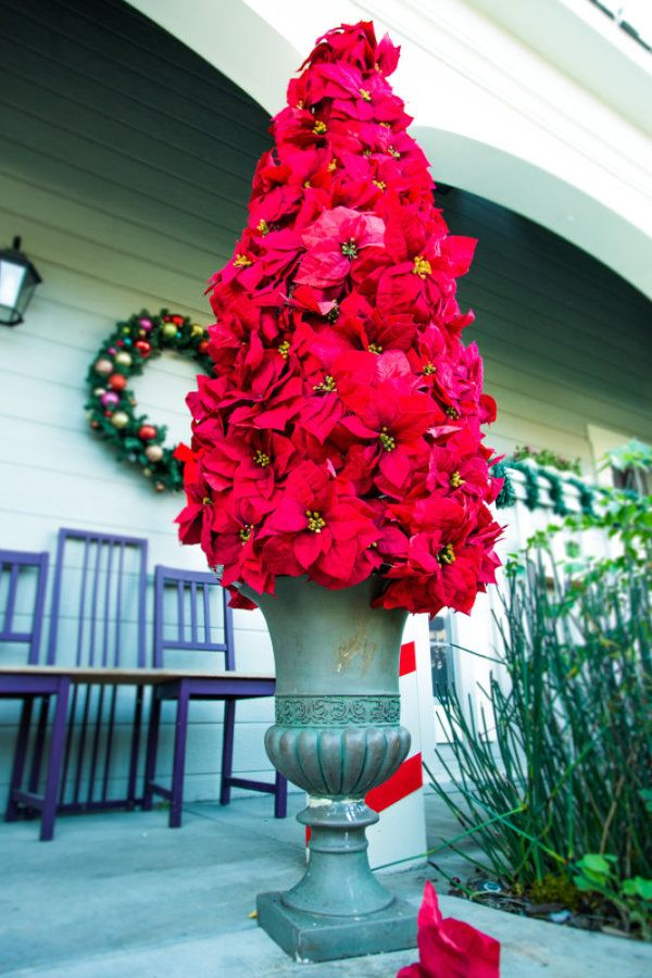 Best ideas about poinsettia tree on pinterest