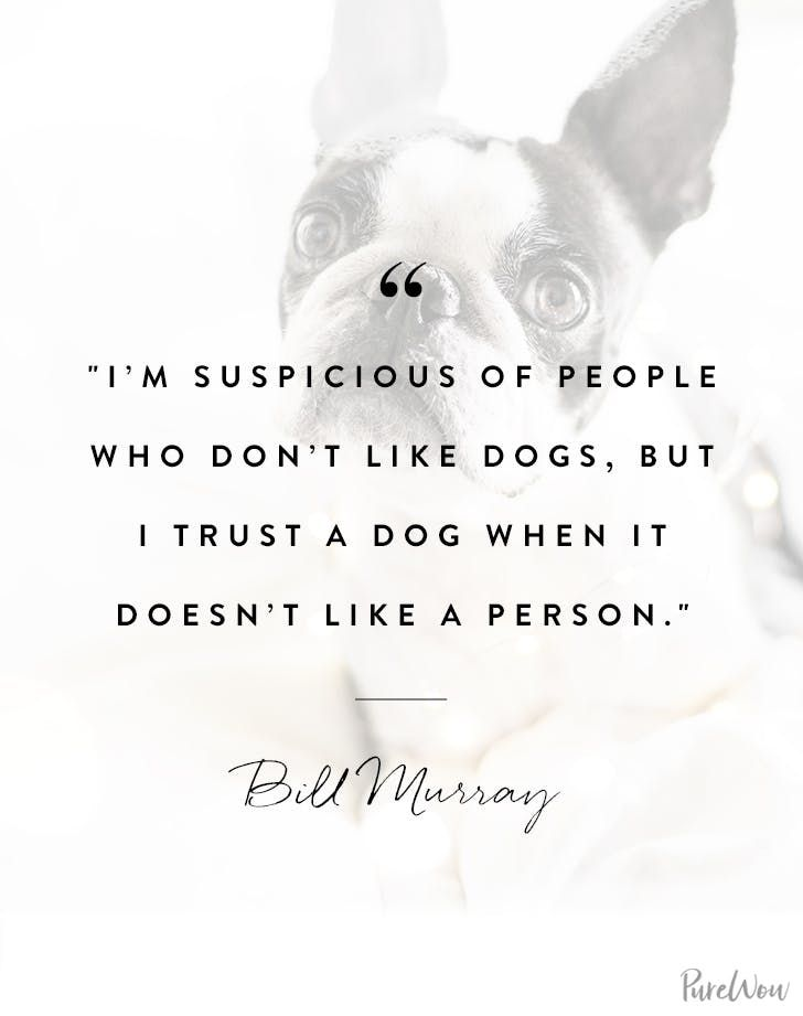 14 Canine Quotes That Completely Seize Your Relationship with Your 4-Legged Pal