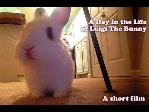 A Day In the Life of Luigi The Bunny - A short film by Johnny Video