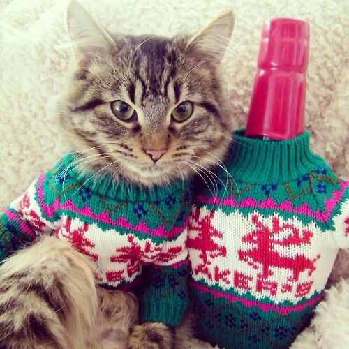 Matching Sweaters For Cats And Owners