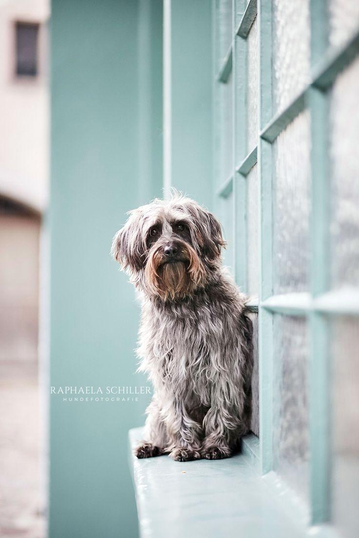 Pin Auf Hundeportraits