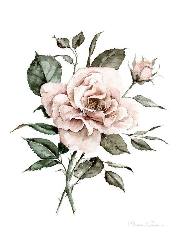 Faded Rose Watercolor Print Watercolor Rose Botanical Drawings Watercolor Flowers