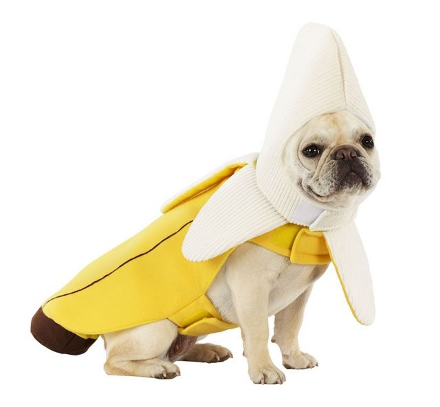 41 best Dog Halloween Costumes images on Pinterest | Pet ...
