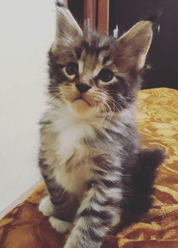 200 Striped Cat Names Striped Cat Grey Tabby Cats Orange Tabby Cats