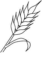 imagenes de espigas de trigo para colorear - Buscar con Google