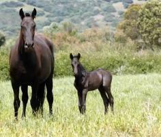 FOTOGRAFIAS, que dejan huella | Menorca Horses