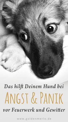 Silvester-Angst beim Hund: Was wirklich hilft – Christiane Seidl