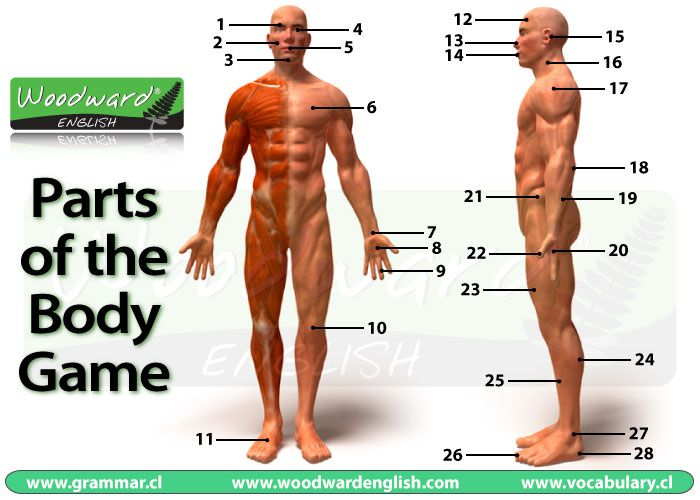 Parts of the Body Picture Game in English