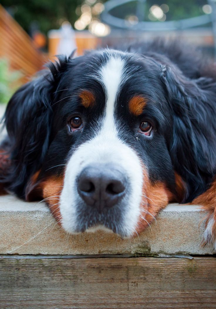 The author of To Keep Love Blurry reveals his fascination with dogs that aren't his to adore.