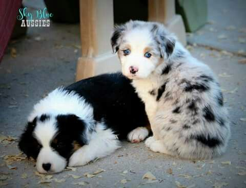I want these little guys!!!
