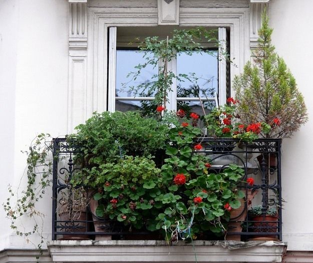 Фотография: Флористика в стиле , идеи оформления балкона, как оформить балкон, освещение балкона, декор для балкона, полезные мелочи для балкона, Советы, Декор интерьера, Балкон – фото на InMyRoom.ru