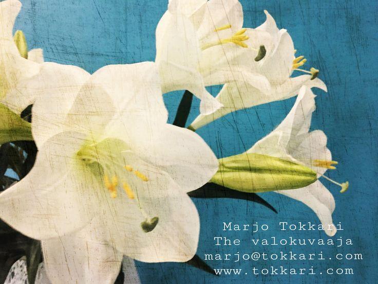 The Valokuvaaja Marjo Tokkari Yo- ja perhepotretit.