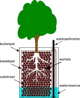 Alles over hydrocultuur: Wat is hydrocultuur?