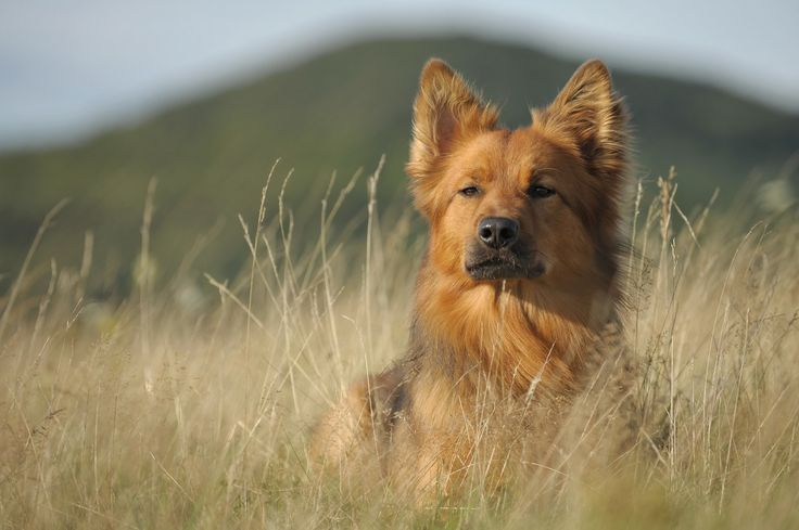 Ich habe alles im Blick - Harzer Fuchs - ein wunderschönes Model